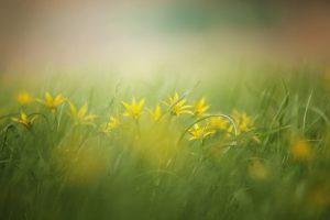Misty grass field